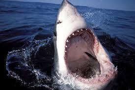 Турист из Германии покусанный акулой скончался от потери крови